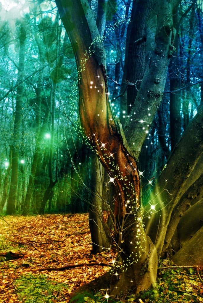 New Earth Matrix Workshop Presented by Yves Nager. Awaken Your Inner Creative Genie! In this 1-day workshop, you will learn how to co-create with the magical realm of the elemental kingdom, which is an important part of nature.