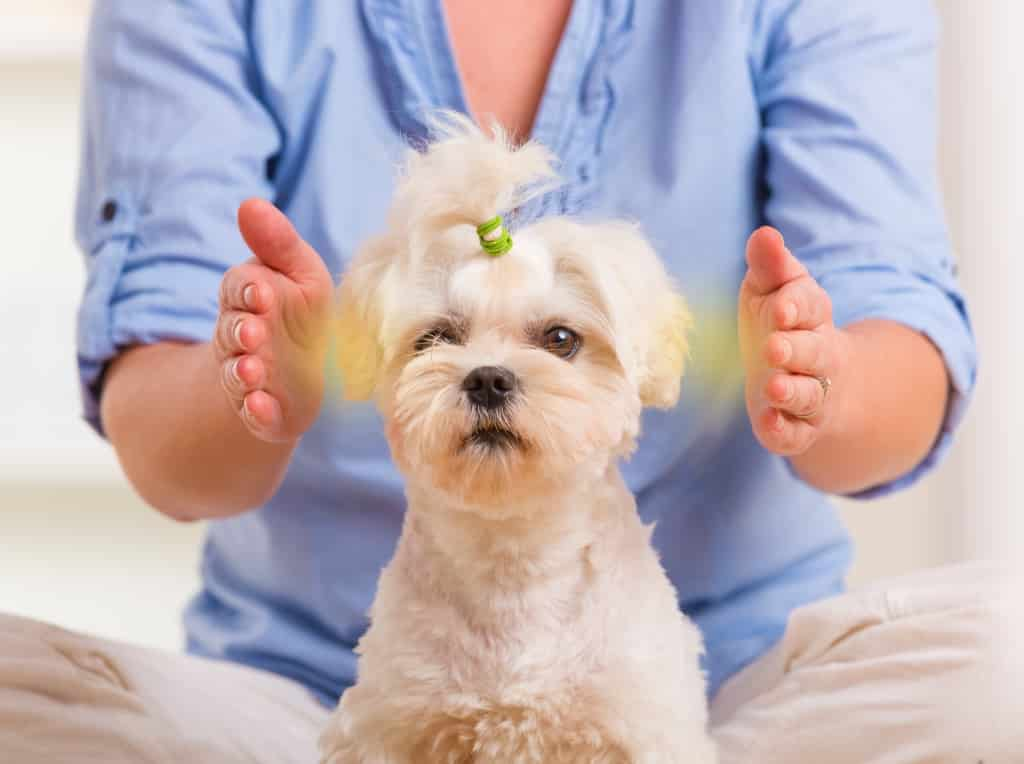 Animal Healing Therapy Offered by Yves Nager. Alternative healing therapies designed for our beloved animal friends. Let Yves bring your family pet back to wholeness and wellbeing.